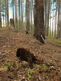 Disolving Tree